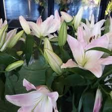 flowers tucson savon flowers florists 1665 e 18th st sam hughes tucson az
