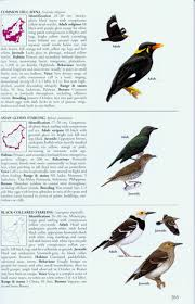 a field guide to the birds of borneo susan myers nhbs shop