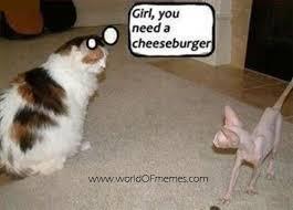 Fat Cat Meme - girl you need a cheeseburger meme boomsbeat