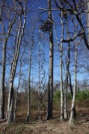 the vine tree stand imgur