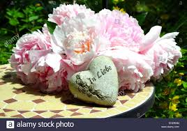 Chic Flower Love Garden Peonies Shabby Chic Flowers Stock Photo Royalty Free