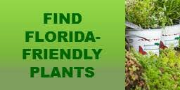 city of fort lauderdale fl florida friendly landscaping