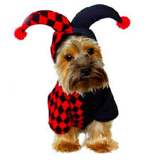 Cheap Dog Costumes Halloween Cheap Puppy Halloween Costumes Aliexpress