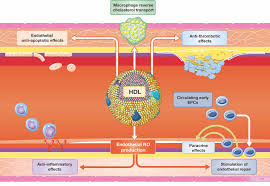 molecular mechanisms of vascular effects of high u2010density