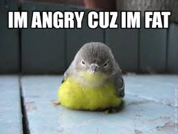 Crazy Bird Meme - me too little bird me too animal arious pinterest mad meme