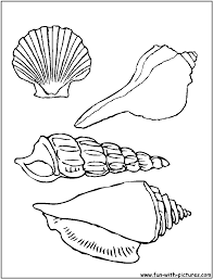 drawn shell colouring page pencil and in color drawn shell