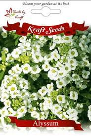 Flower Seeds Online - gazania f1 hybrid flower seeds winter flower seeds flower seeds