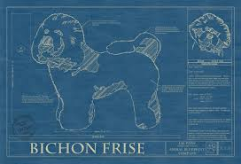bichon frise names male bichon frise animal blueprint company