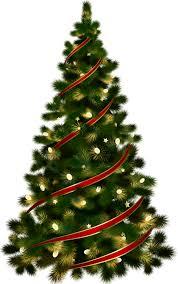 real christmas tree of real christmas trees