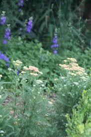 Plants That Do Not Need Much Sunlight by Sun Partial Sun Partial Shade Shade Dappled Sun Full Shade