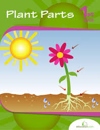 plants and flowers lesson plans themes printouts crafts