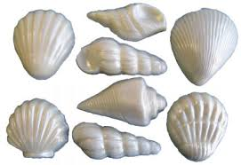 where to buy seashells buy white chocolate seashells for wedding cakes and more by olde