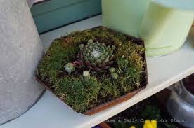 repurposed old pots and pans to succulent planters hometalk