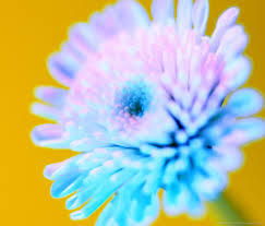 Blue Flower Backgrounds - download bright blue flower wallpaper for samsung galaxy tab