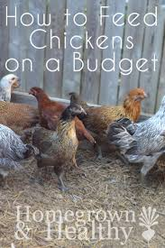 617 best chickens images on pinterest backyard chickens chicken
