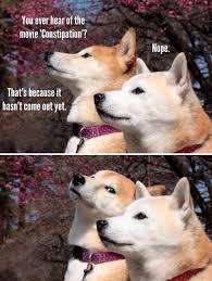 Shiba Inu Meme - shiba inu dogs discuss the new constipation movie
