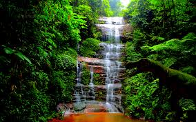 forest waterfall wallpaper 6941553