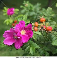 flowers and fruits flowers fruits stock photo 82326988