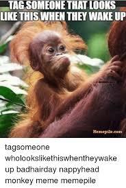 Monkey Meme - 25 best memes about monkey meme monkey memes