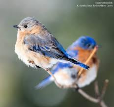 wild birds unlimited home facebook