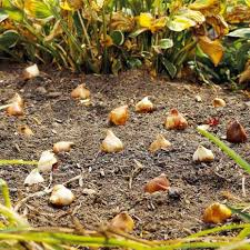 what to plant in fall for spring bulb success midwest living
