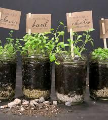 Diy Self Watering Herb Garden Best 25 Mason Jar Herbs Ideas On Pinterest Mason Jar Garden