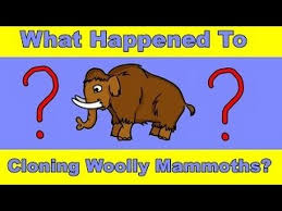 crispr scientists bringing woolly mammoths dead