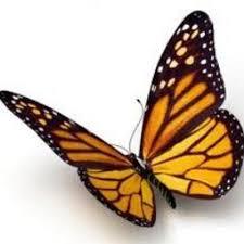 monarch butterfly savemilkweed