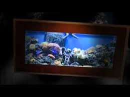designer aquarium designer aquarium