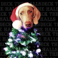 160 best christmas card ideas images on pinterest merry