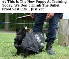 here have some service puppies in training album on imgur