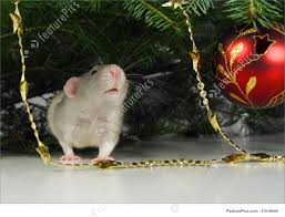 rat and ornaments image