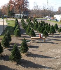 611 christmas trees