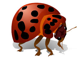 bugs png images transparent free download pngmart com