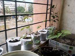 the balcony garden strategy more edible plants in small space