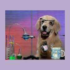 I Have No Idea What Im Doing Meme - create meme dog scientist dog i have no idea what im doing