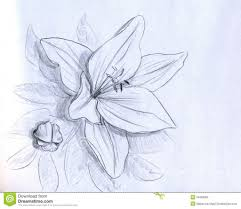Pencil Sketch Of Flower Vase 3d Flowers Pencil Drawing How To Draw A Flower Vase Pencil