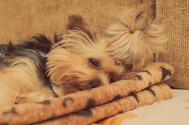 Comfort Pet Certification Is Hospice Pet Therapy