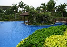 Beautiful Plants by Misc Place Beautiful Plants Palmtrees Pool High Quality Wallpaper