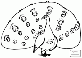 coloring pages birds peacock 18 coloringbooks7 com