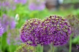 flowers scenery garden free stock photos download 14 426 free