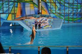 Texas wild swimming images Seaworld san antonio wild days laugh with us blog jpg