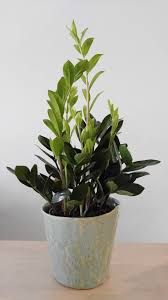 8 great low light house plants u2014 the zen succulent durham u0027s