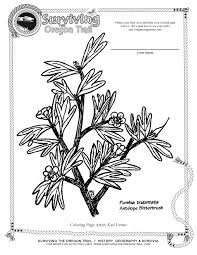 free coloring page flowers antelope bitterbrush surviving the