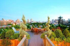 roof garden plants make the most of your rooftop garden with these design tips