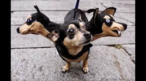 costumes for dogs 10 amazing pet costumes bunow bloomsburg