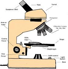 compound light microscope parts and functions partsof microscope html