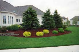 Front House Landscaping by Landscaping Ideas For Landscaping Under Evergreen Trees