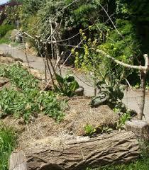 Raised Rock Garden Beds Hugelkultur The Ultimate Raised Garden Beds