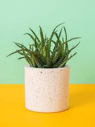 surface minimum bureau bureau patio tout l univers des plantes succulentes à portée de